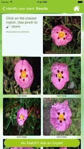 garden answers plant id on the app store