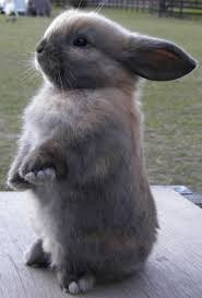 i used to have a rabbit that looked just like this little guy