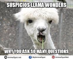 Llama Meme - shaved llama meme png