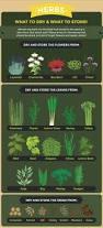 best 20 drying herbs ideas on pinterest herbs growing herbs