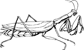 Dessins Gratuits à Colorier  Coloriage Insecte à imprimer