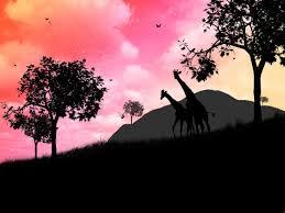 182 giraffe hd wallpapers backgrounds wallpaper abyss