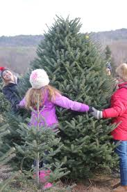 long island fraser fir christmas trees naturally grown organic