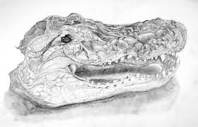 gator head by professor r on deviantart