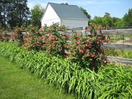 garden design oehme van sweden u0027s blog
