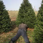 Washington Christmas Tree Farms - plut u0027s christmas tree farm christmas trees 220 flocktown rd