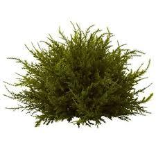 small topiary set wayfair