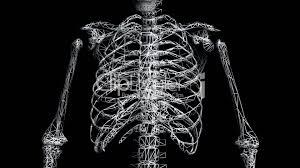 3d Human Anatomy Rotation Of 3d Skeleton Ribs Chest Anatomy Human Medical Body