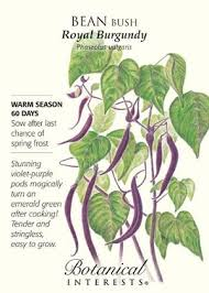 What To Plant In Spring Vegetable Garden by What To Plant In Your Vegetable Garden Dog Days Of Summer