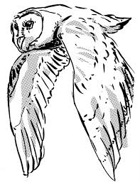 owl sketches shawn brook williams