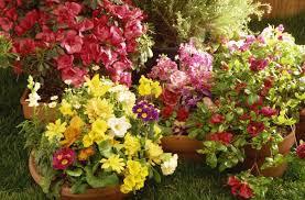 imagenes de jardines pequeños con flores usa estas 6 ideas para disfrutar en grande de un jardín pequeño vix