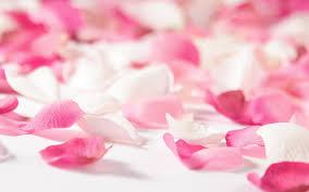 flower petals colorful flower petals flower petals