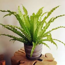 how much light do pot plants need what indoor plants need little light interior design ideas avso org