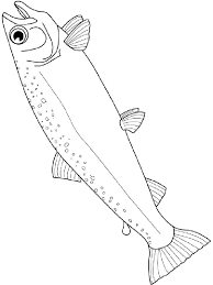 salmon fish coloring page salmon coloring amindfulgeek com