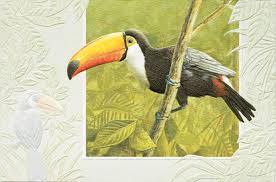 pumpernickel greeting cards pumpernickel press greeting card toco toucan andy thornal company