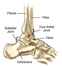 Subtalar Joint Fracture Ankle Fractures Dr Samuel D Carter Md