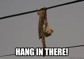 Hang In There Meme - hang in there memes quickmeme