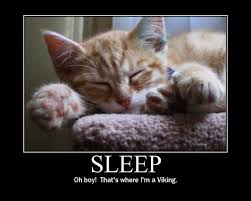 Sleepy Cat Meme - sleep cat meme cat planet cat planet