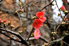 free images tree nature branch blossom fruit leaf flower