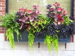 Window box idea No flowers  all of the drama comes from the