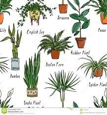 houseplants seamless pattern stock vector image 91547626