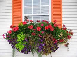 The Geranium On The Windowsill Just Died The Impatient Gardener How To Plant A Rockin U0027 Window Box