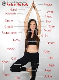 female body parts all in english female name all part of body part