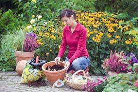 spread beauty in your garden by planting daffodil bulbs my