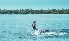 sixth sense maldives 28 images yachts and islands six senses