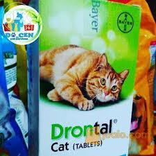 Obat Cacing Kucing Di Petshop obat cacing kucing drontal docen petshop murah dan dokter hewan