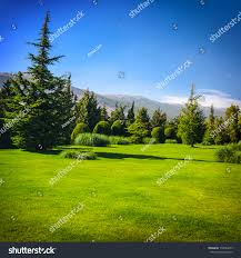 beautiful landscape fresh fir trees forest stock photo 139094273