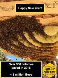 beekeeping live bee removal service santa barbara ca
