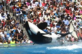 judge throws out false advertising lawsuits against seaworld la