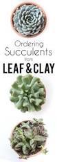 best 25 where buy succulents ideas on pinterest buy
