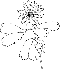 incredible plant coloring pages alphabrainsz net