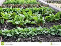 shining design vegetable garden plants plain decoration companion