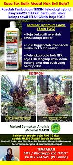 Minyak Kelapa Sawit Terkini 2 kaedah bagi meningkatkan untung hasil kelapa sawit baja sawit