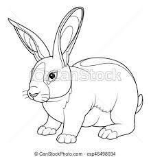 vectors rabbit coloring coloring rabbit hand drawn