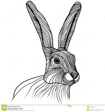 rabbit or hare head vector illustration royalty free stock images