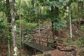 sydney the hills treetops sydney cumberland state forest u0026 cafe saligna sydney