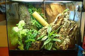 gold dust day gecko caresheet reptile forums