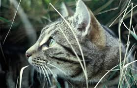make your cat conservation friendly home and garden