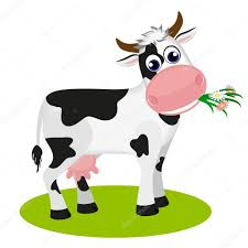 cute black and white cow eating daisy isolated on white vector