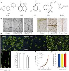 a novel pyrimidin like plant activator stimulates plant disease