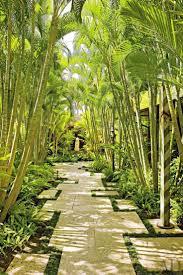 Tropical Backyard Ideas 25 Trending Tropical Backyard Ideas On Pinterest Tropical