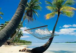 holiday dreaming tropical island palm trees and hammock travel