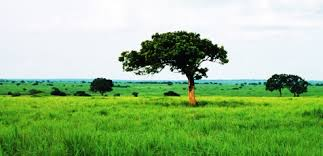 Tropical Savanna Dominant Plants - environment 11 tropical grasslands and savannahs