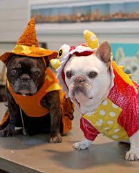 Halloween Appetizers Martha Stewart Pet Costumes Martha Stewart