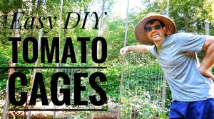 growing tomatoes in diy tomato cages easy youtube