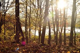 free photo forest trees back light sunlight free image on